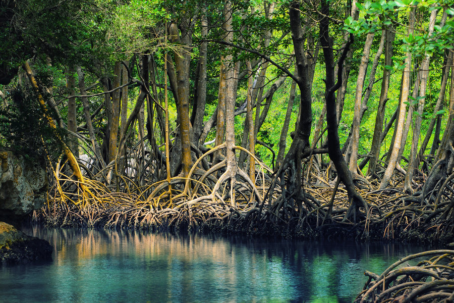 Dominican Republic — Los Haitises National Park mangroves