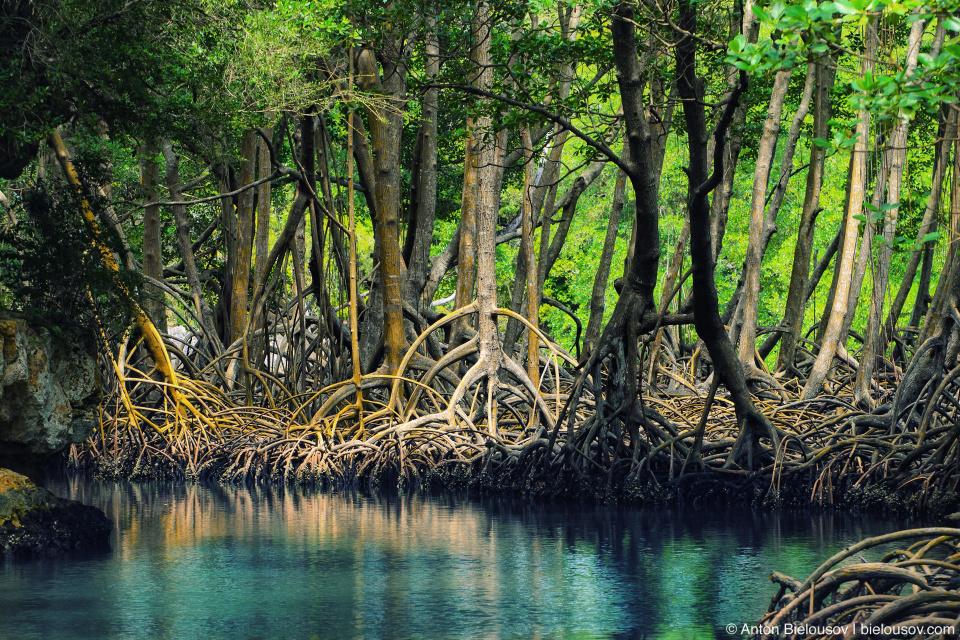 Dominican Republic — Los Haitises National Park mangroves