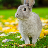 a-rabbit-in-minoru-park-richmond-bc