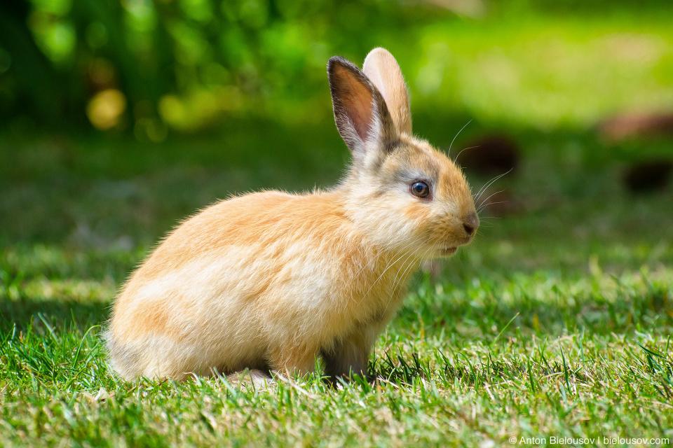 Зайчонок