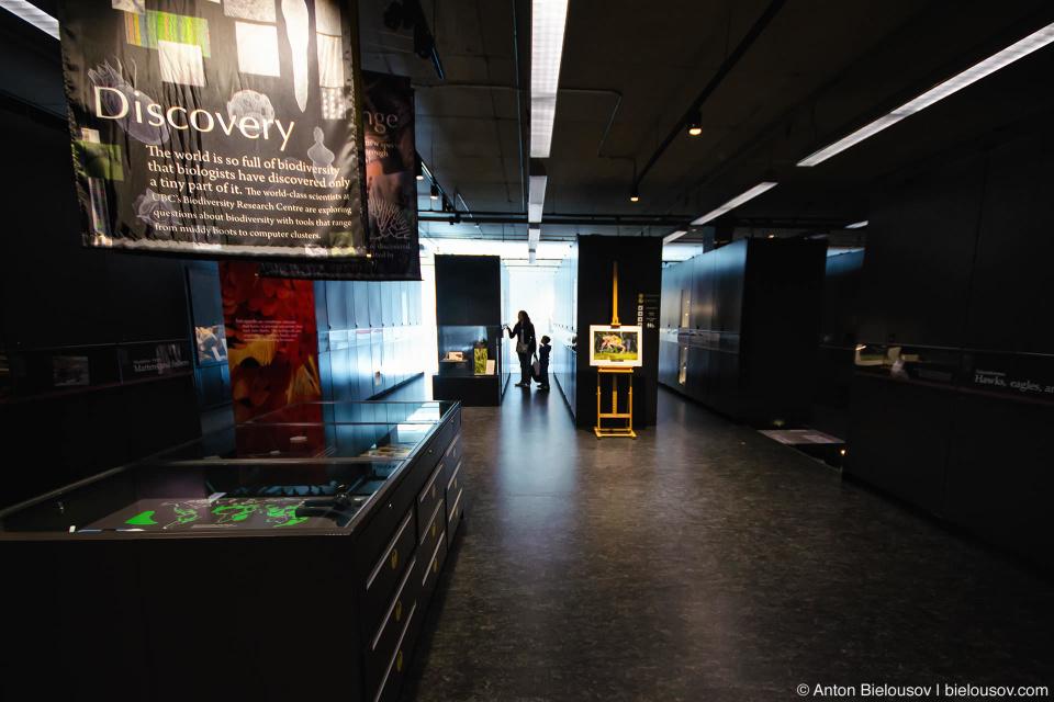 Beaty Biodiversity Museum (UBC, Vancouver)