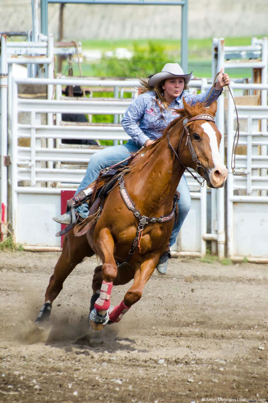 Barrel Horse Racing