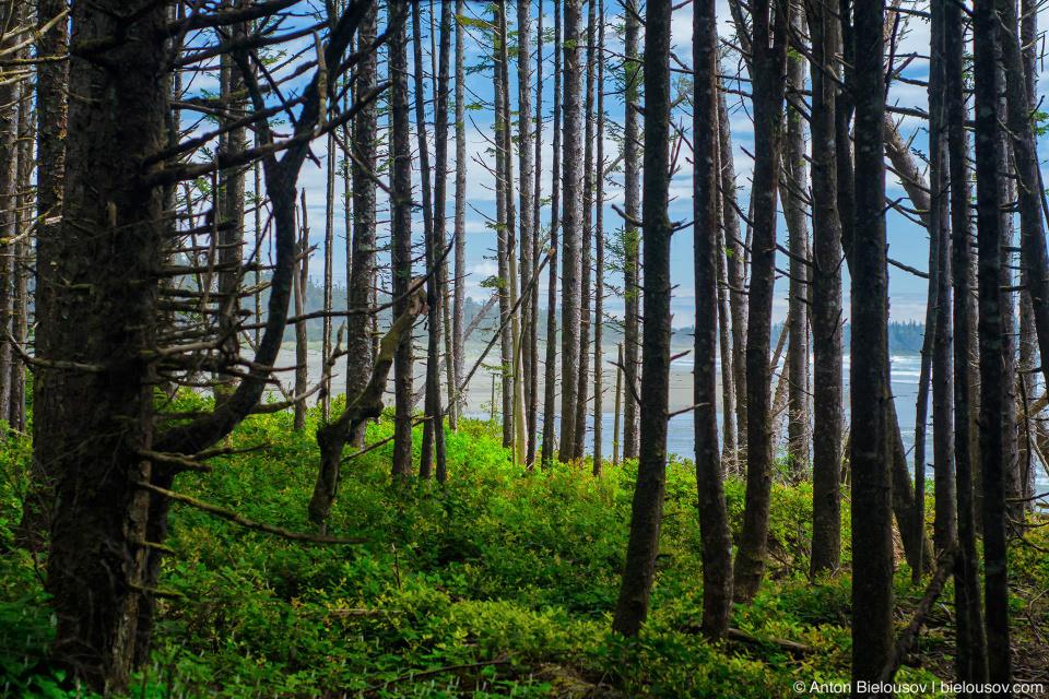 Pacific Rim National Park sea view