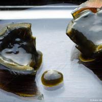Желток же становится темно серым и кремообразным с оттенками от зеленого до черного — внутри более жидкий чем снаружи, гапоминает хороший мягкий французский сыр, твердый снаружи и почти жидкий внутри.