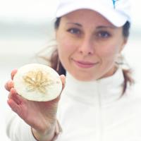 Плоский морской еж (sand dollar)