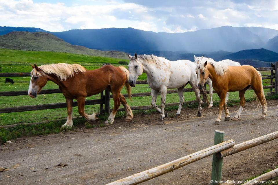 Табун лошадей на ранчо Sundance Guest Ranch (Ashcroft, BC)