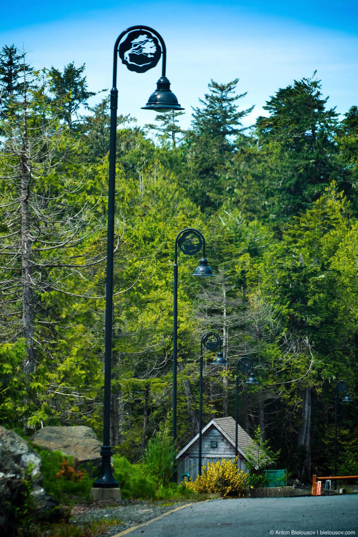 На фонарных столбах — старый логотип города — дерево, которое вот-вот снесет штормовым ветром. (Ucluelet, BC)
