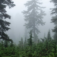 Fog on Seymour Mountain Trail
