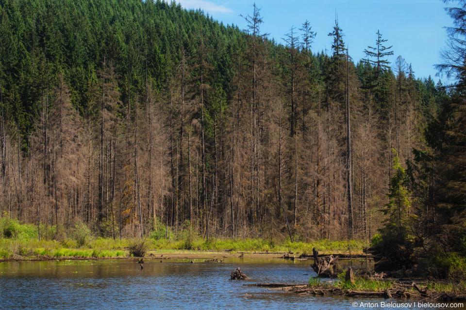 Buntzen Lake trail