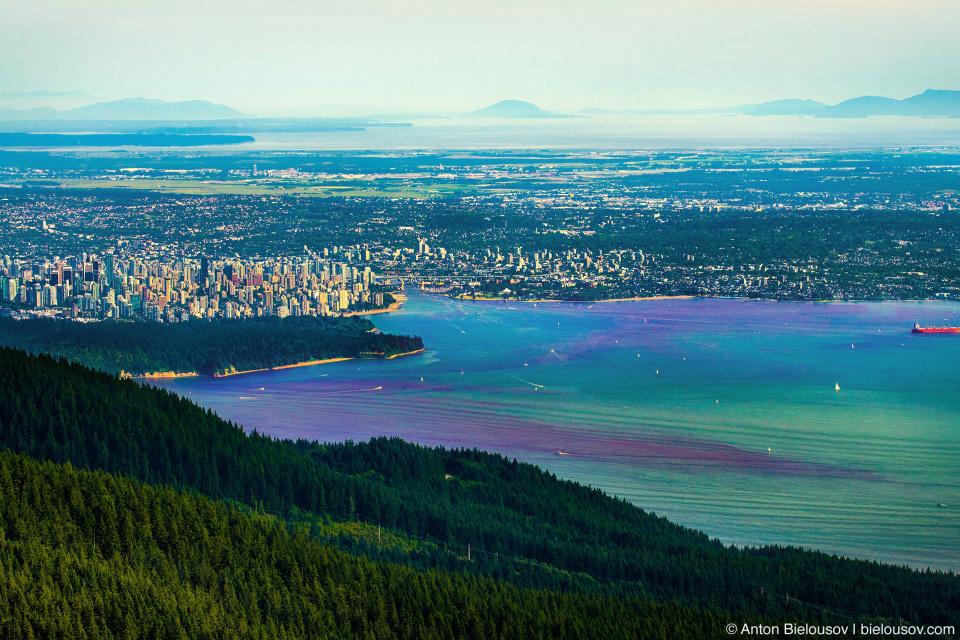 Красный прилив в Ванкувере — цветение воды (фитопланктона) в заливе Буррард