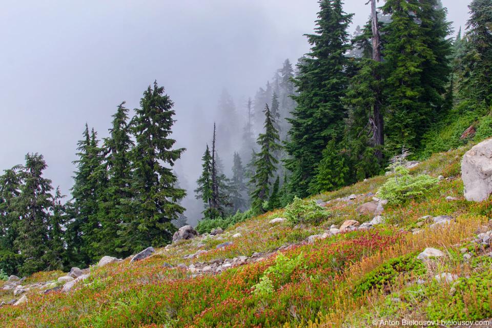 Elfin Lakes trail