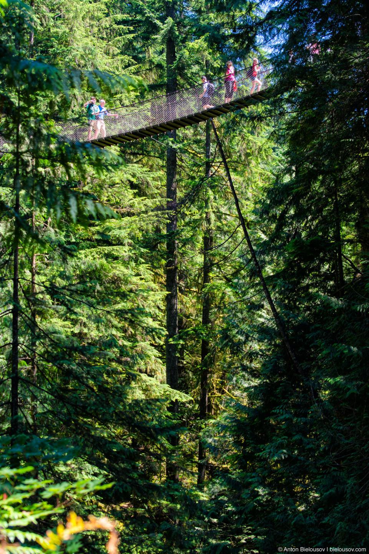 Подвесной мост Lynn Canyon Suspension Bridge (North Vancouver, BC)