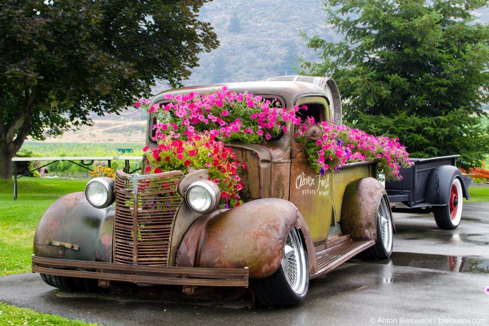 Oliver Twist Wineyard Vintage Truck (Oliver, BC)