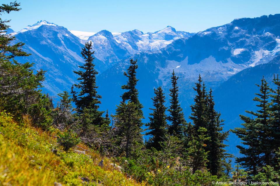 Вид с трейла High Note (Whistler, BC)