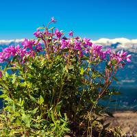 Где короткое альпийское лето в самом разгаре