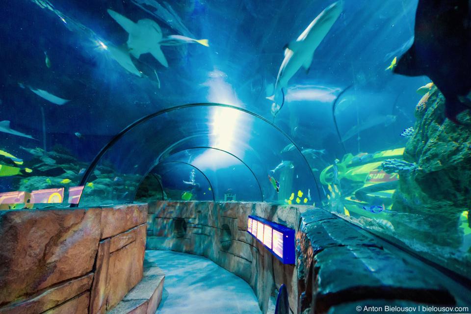 Но зато с подводным туннелем которые есть уже, наверное, везде кроме ванкувера.