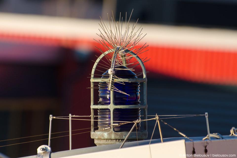 Bird anti-perching device (Seattle, WA)