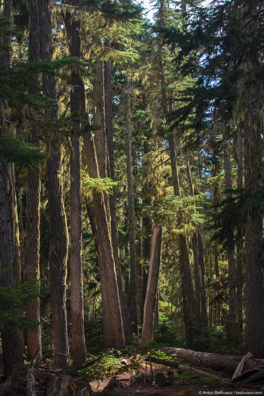 Субальпийский лес