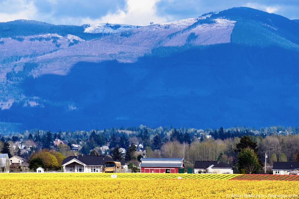 Skagit Valley, Mount Vernon, WA