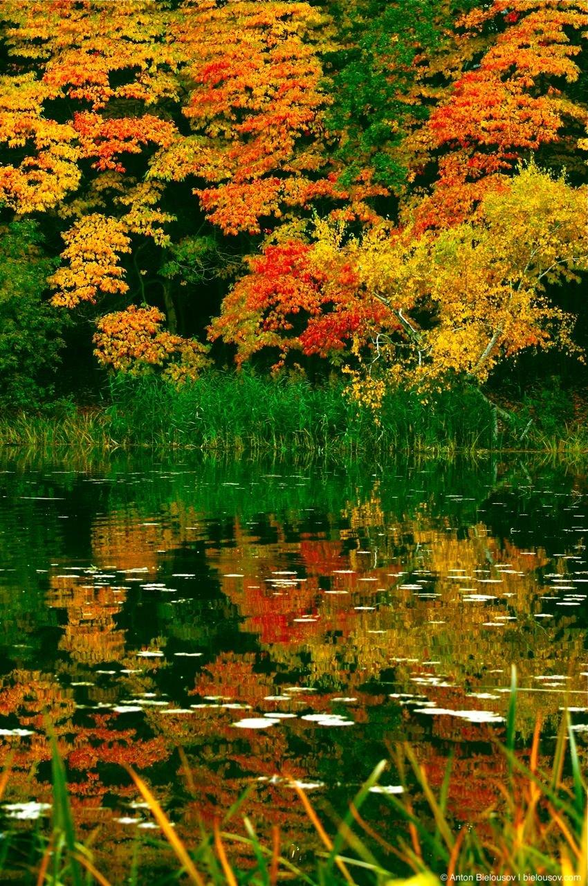 Отражение осенней листвы в озере Хай Парка