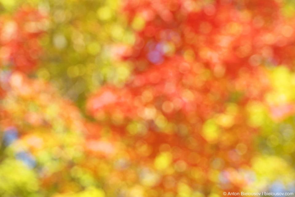 High Park Autumn Colours