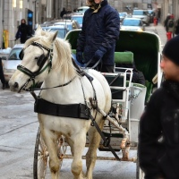 Coachman in Montréal Historical Downtown