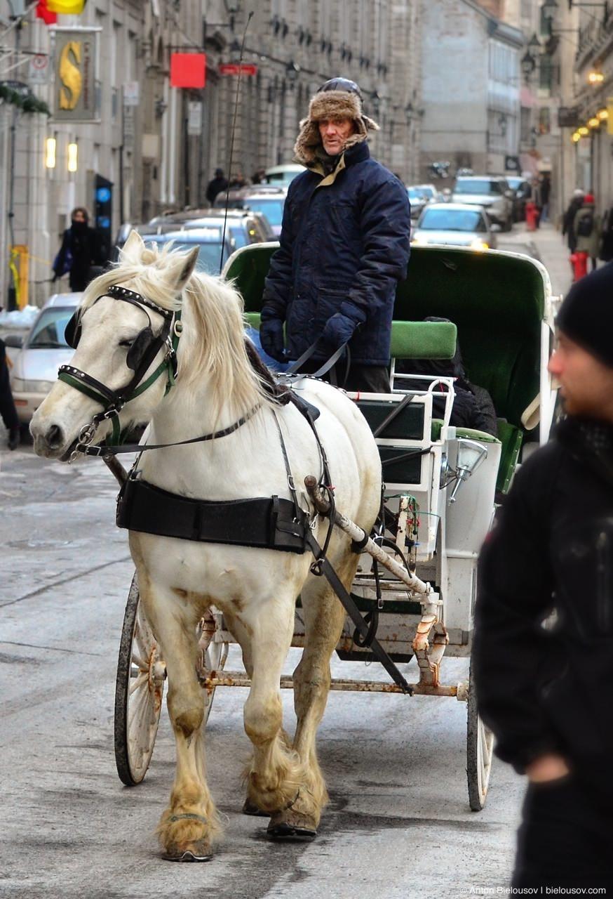 Coachman in Montréal Historical Downtown