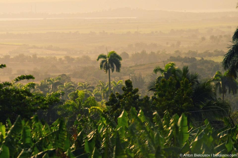 Cuban banana plantation
