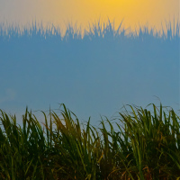 Cuban sugar cane plantation on sunset reflected in bus window