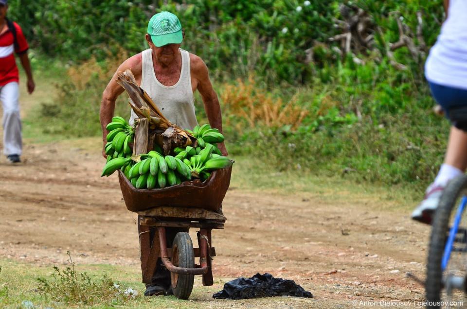 Cuban farmer with bananas