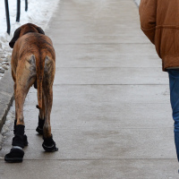 Dog boot save laws from salt