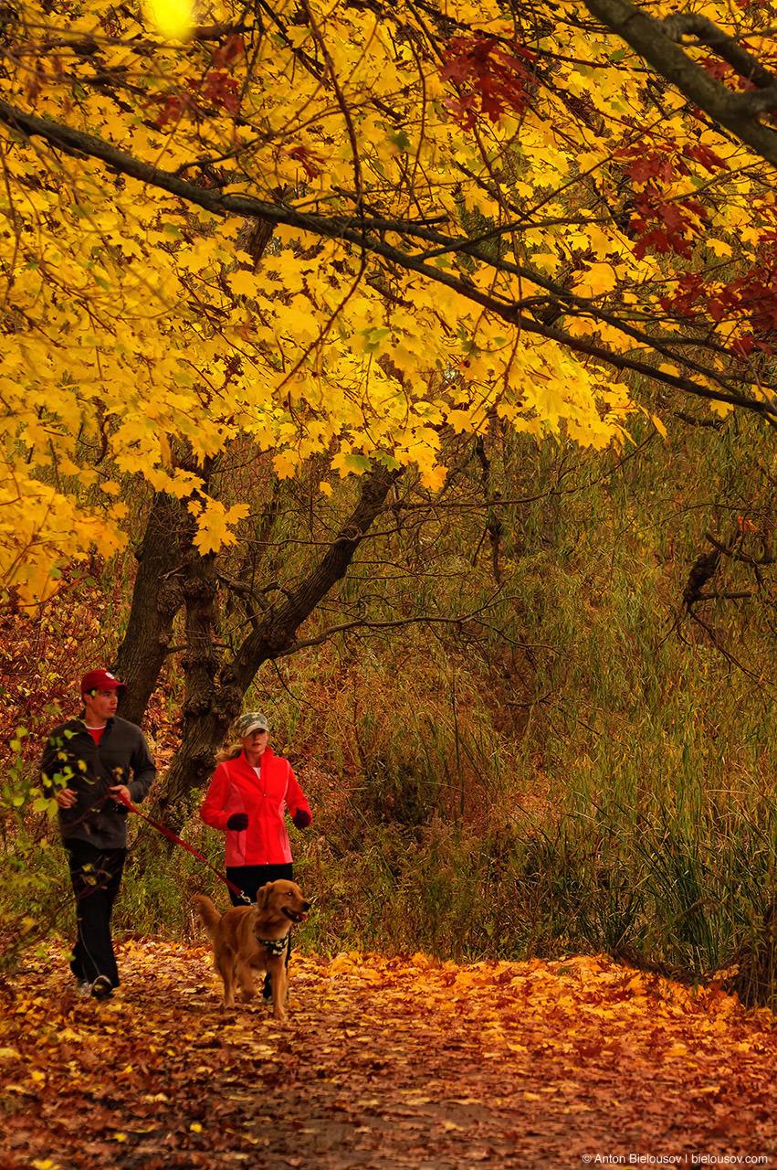 High Park Jogging in Autumn