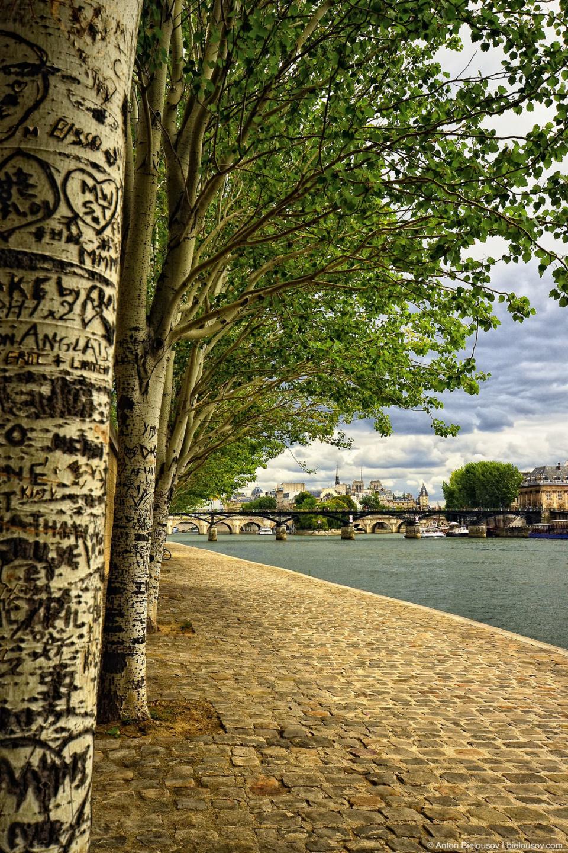 Paris Carved Trees on Seine River Shore