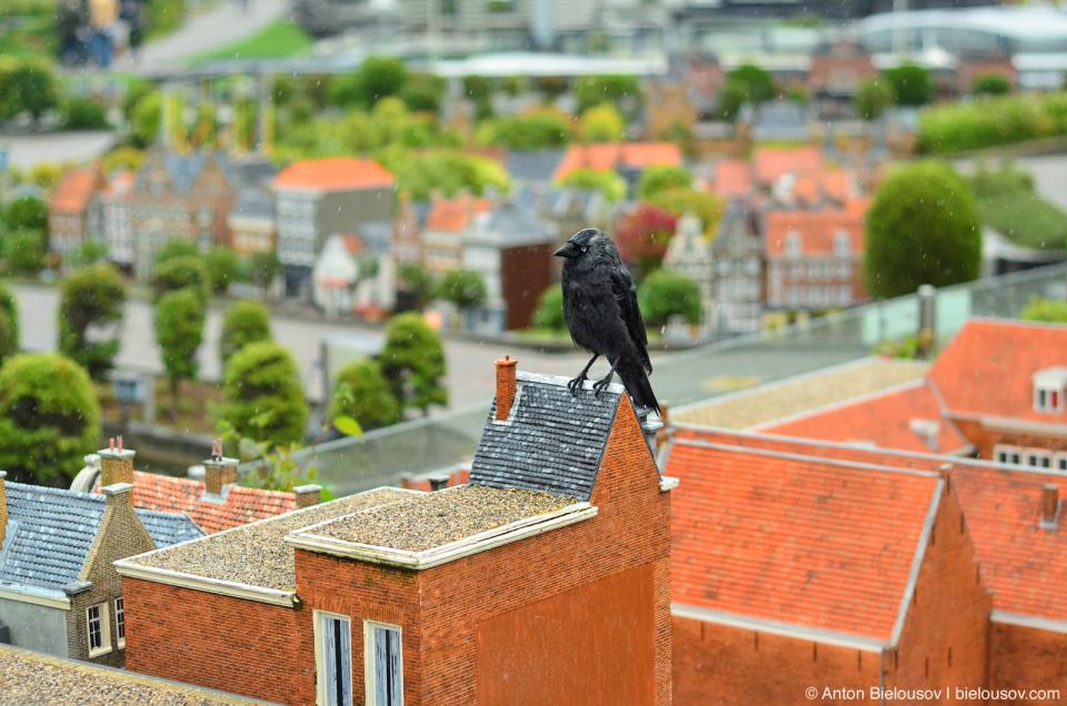 Ворон на крыше в Мадуродаме (Гаага, Нидерланды)