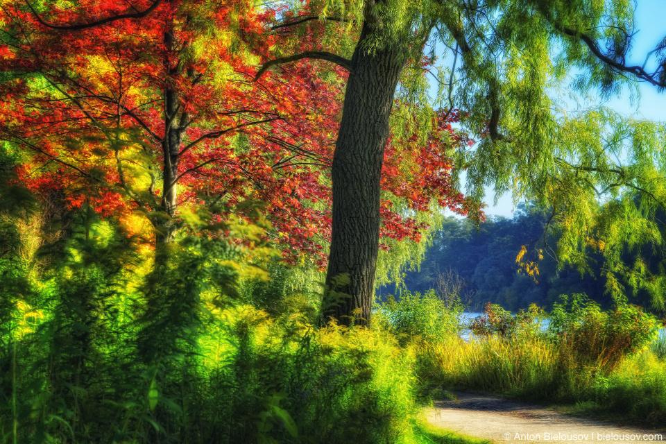 High Park Autumn HDR
