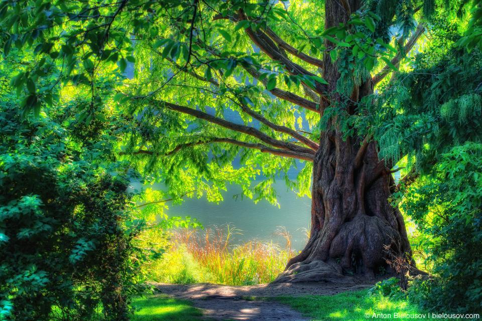 High Park Old Tree Fairy Tale