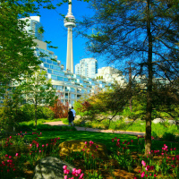 Toronto Music Garden view to CN Tower in spring