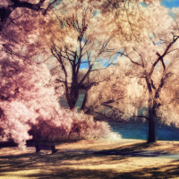 Toronto High Park in Infrared