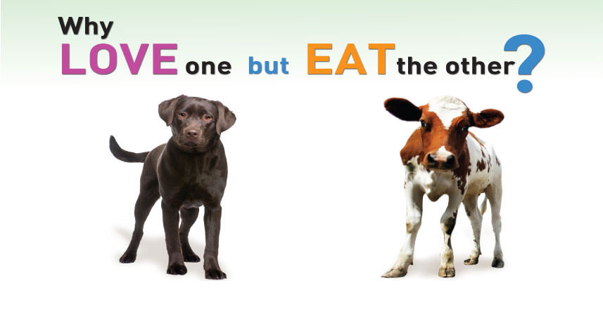 BeVEg: Why love one, but eat the other?