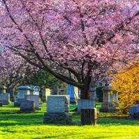Канадские кладбища. <small>Mount Pleasant Cemetery</small>