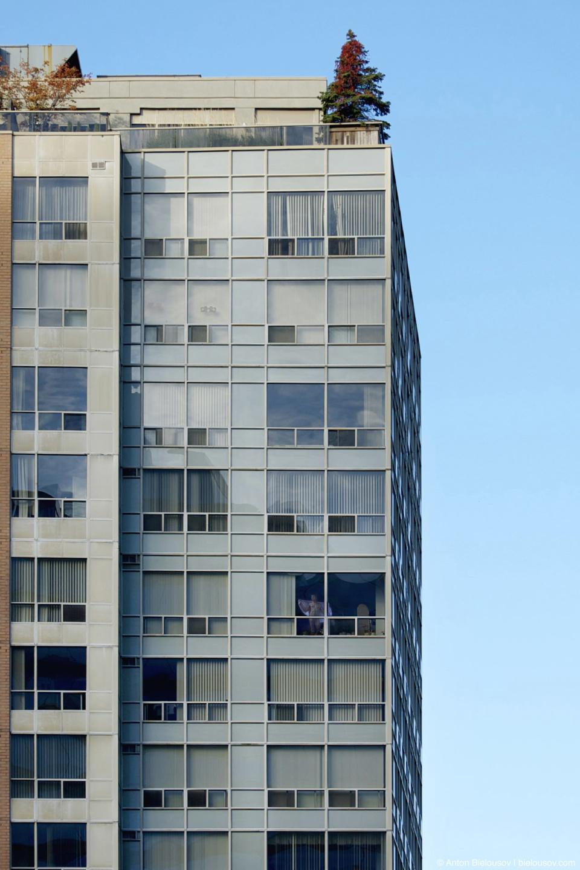 Зеленые крыши — в Торонто на крышаж домов по закуону должнв расти деревья.