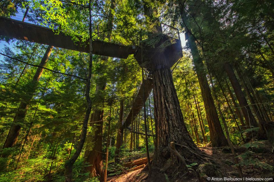 Capilano bridge Treetop Adventure