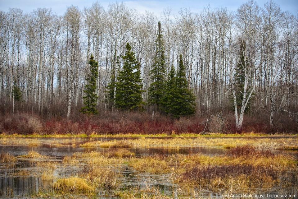North Ontario marsh