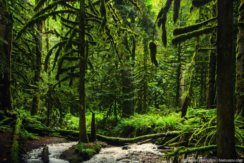 Bridal Veil Falls Provincial Park rain forest