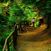 Walking British Columbia rainforest trail at Capilano Canyon