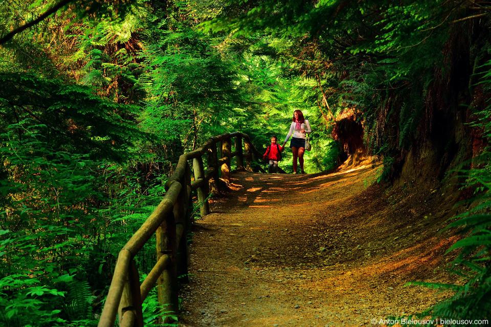 Walking British Columbia rainforest trail at Capilano Canyon
