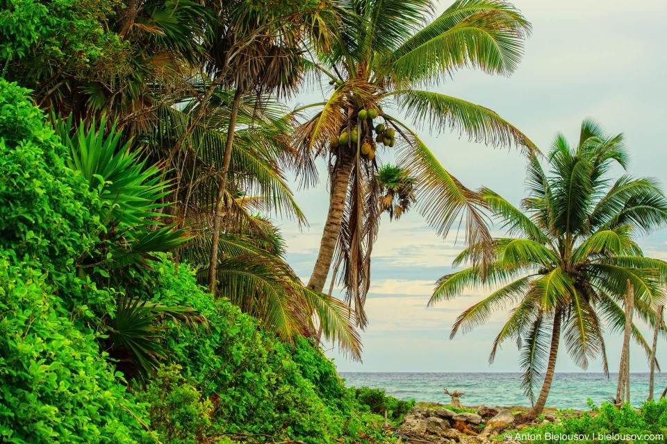 Обои на рабочий стол: пальмы на берегу в Мексике