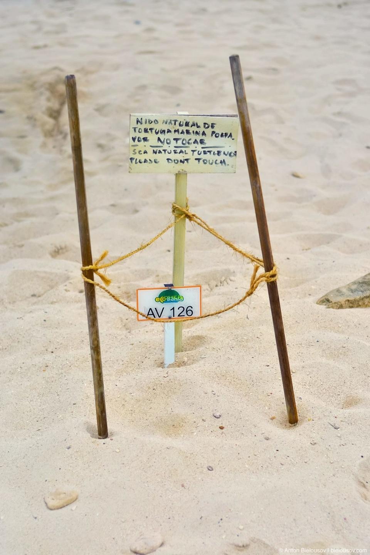 Кладка яиц морской черепахи на пляже отеля Grand Bahia Principe Akumal в Мексике