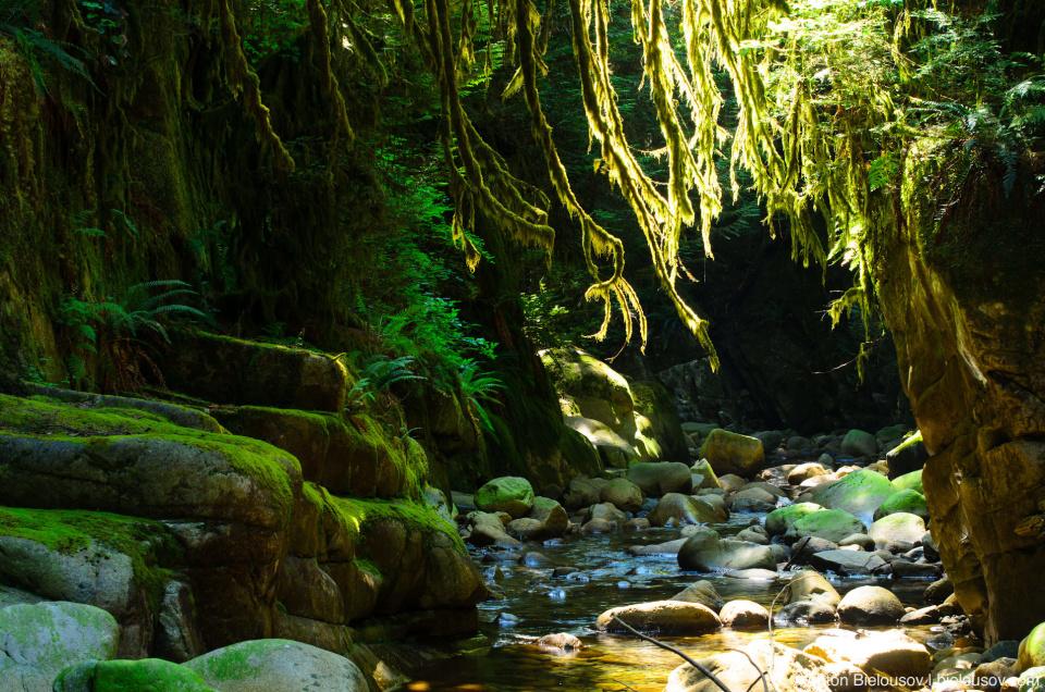 Cypress river