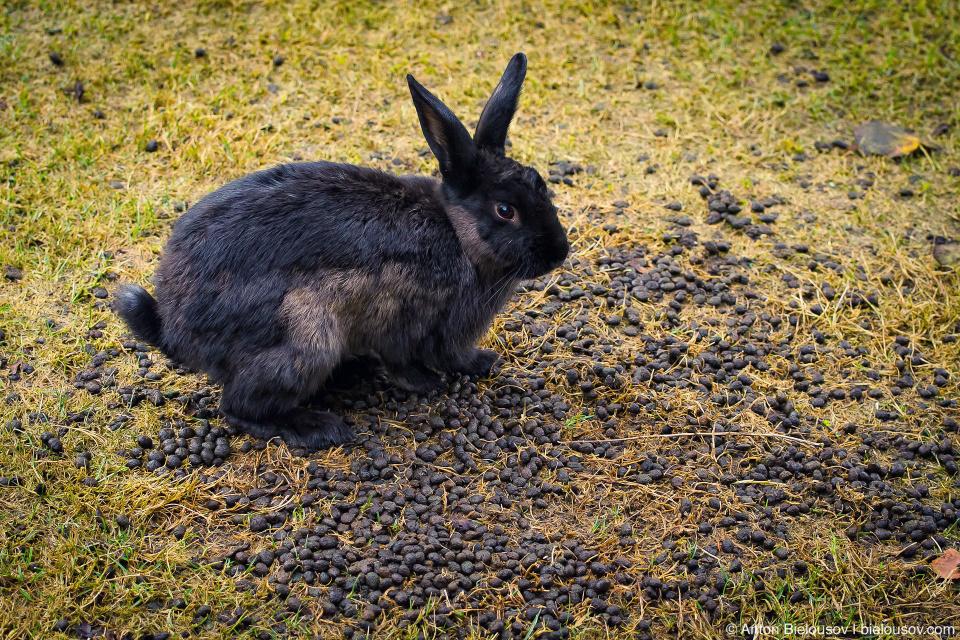 Bunnies dedicated washroom space in Minoru Park (Richmond, BC)